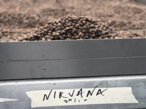 nirvana drying bed
